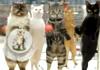 Реклама Cravendale: Якби в кішок були пальці