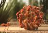 Реклама De Lijn: Мурахи показали вигоду автобусних турів