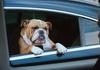 Volkswagen: Якого собаку оберете ви?