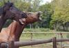 У рекламі Volkswagen показали, як розсмішити коней