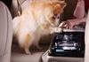 Реклама Hyundai: Як справитися з песиком