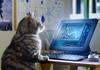 Whiskas відкрив Котячий інститут технологій