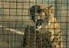 10 найкумедніших рекламних роликів Суперкубку 2012