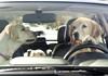 Собаче сімейство протестувало Subaru