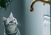 Компанія Whiskas розповіла про цікавість котів