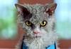 Помпезний кіт Альберт став героєм реклами Honda