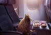 Пташка ківі протестувала політ з Air New Zealand
